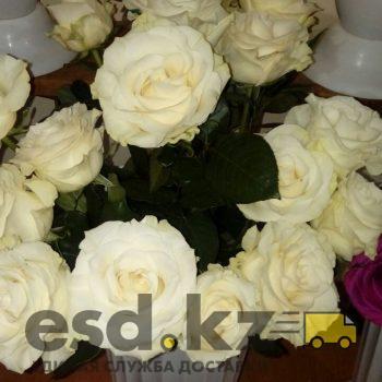 rozy-belye-mondial